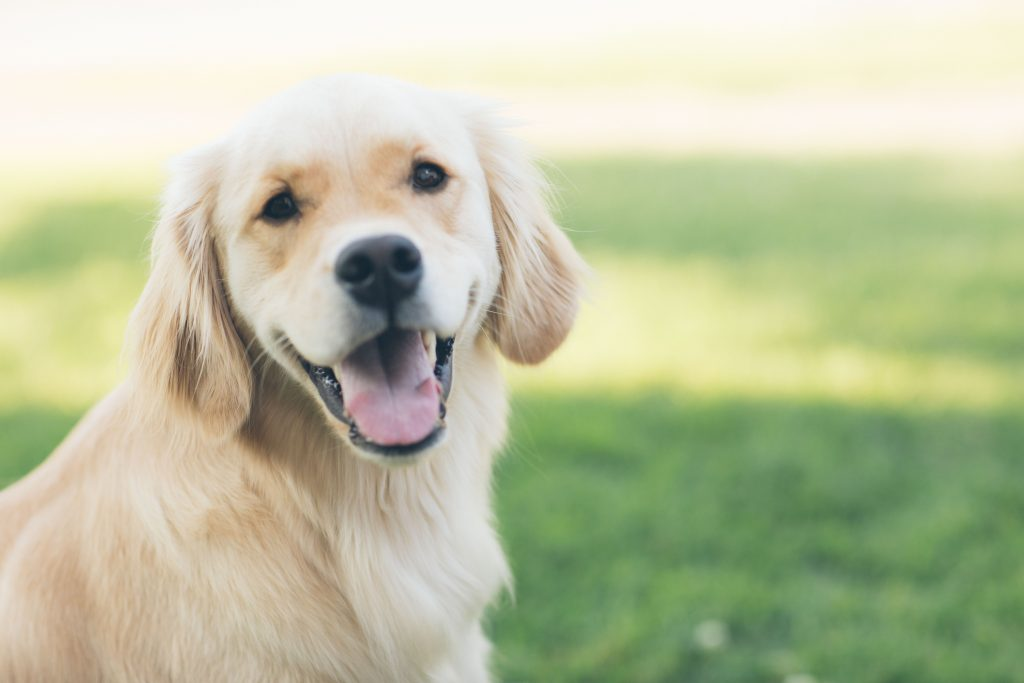 photo of dog for yaffa and associates blog post